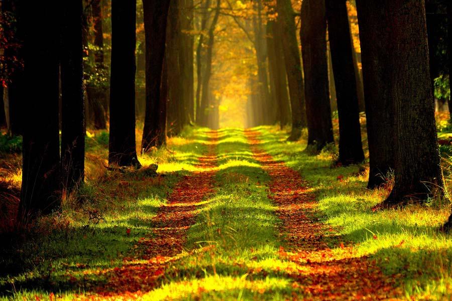 A faállományok átalakításával állítják helyre a védett erdei élőhelyeket